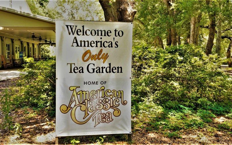 Welcome to the Charleston Tea Garden
